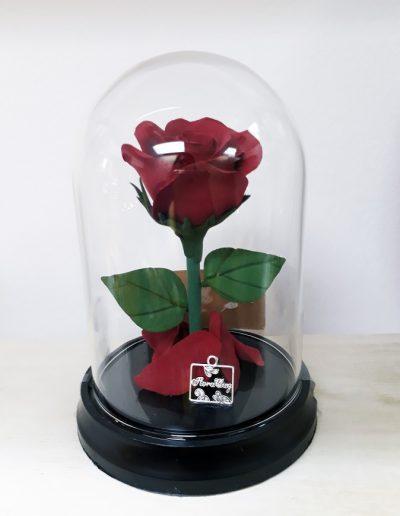 B&B Dome: Rose